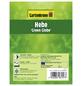 GARTENKRONE Strauchveronika, Hebe »Green Globe«, weiß, winterhart-Thumbnail