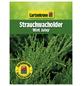 GARTENKRONE Strauchwacholder, Juniperus chinensis »Mint Julep«, winterhart-Thumbnail