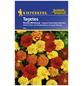 KIEPENKERL Studentenblume, Tagetes patula, Samen, Blüte: mehrfarbig-Thumbnail