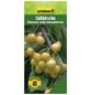 GARTENKRONE Süßkirsche, Prunus avium »Dönissens Gelbe«, Früchte: süß, zum Verzehr geeignet-Thumbnail