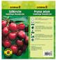 GARTENKRONE Süßkirsche, Prunus avium »Hedelfinger Riesenkirsche«, Früchte: süß, zum Verzehr geeignet-Thumbnail