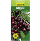 GARTENKRONE Süßkirsche, Prunus avium »Lapins«, Früchte: süß, zum Verzehr geeignet-Thumbnail