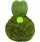 KIBONU Sukkulente Herzblatt, Hoya kerrii, grün-Thumbnail