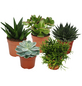 Sukkulenten Pflanze,  Sukkulente-Thumbnail