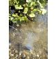 OASE Teichpumpe »AquaOxy«, 8 W, Fördermenge: 500 l/h-Thumbnail