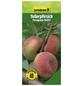 GARTENKRONE Tellerpfirsich, Prunus persica »Paraguayo Delfin«, Früchte: süß, zum Verzehr geeignet-Thumbnail