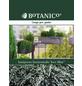 Teppichwacholder horizontalis Juniperus »Icee Blue«-Thumbnail