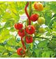 BELLISSA Tomatenspiralstab, Stahl-Thumbnail