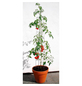 BELLISSA Tomatenturm, Höhe: 180 cm, Stahl-Thumbnail