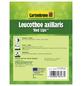 GARTENKRONE Traubenmyrte, Leucothoe axillaris »Red Lips «, creme, winterhart-Thumbnail