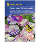 KIEPENKERL Trichterwinde, Ipomoea tricolor, Samen, Blüte: mehrfarbig-Thumbnail
