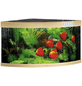 JUWEL AQUARIUM Trigon 350 LED Aquarium-Thumbnail