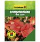 GARTENKRONE Trompetenblume, Campsis tagliabuana   »Madame Galen«, Blüten: orange-Thumbnail