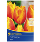 KIEPENKERL Tulpe Flair, Mehrfarbig, 10 Blumenzwiebeln-Thumbnail