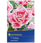 KIEPENKERL Tulpe Queensland Profi-Line, Rosa, 7 Blumenzwiebeln-Thumbnail