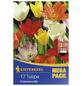 KIEPENKERL Tulpen fosteriana Tulipa-Thumbnail
