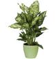 SCHEURICH Übertopf, Breite: 11 cm, grün, Keramik-Thumbnail