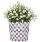 SCHEURICH Übertopf »MOSAIC«, ØxH: 10,6 x 9,3 cm, weiß/grau/rose, Keramik-Thumbnail