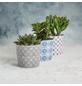 SCHEURICH Übertopf »MOSAIC«, ØxH: 12,8 x 11,8 cm, weiß/taupe/beige/blau, Keramik-Thumbnail