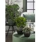 SCHEURICH Übertopf »SHADES«, Breite: 16 cm, grün, Keramik-Thumbnail