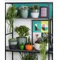 SCHEURICH Übertopf »SHADES«, ØxH: 16 x 14 cm, grün/anthrazit, Keramik-Thumbnail