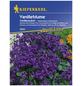 KIEPENKERL Vanilleblume, Heliotropium arborescens, Samen, Blüte: lila-Thumbnail