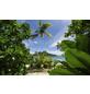 KOMAR Vliestapete »Cast Away Jungle «, Breite 450 cm, seidenmatt-Thumbnail