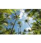KOMAR Vliestapete »Coconut Heaven «, Breite 450 cm, seidenmatt-Thumbnail