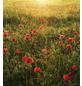 KOMAR Vliestapete »Poppy World«, Breite 250 cm, seidenmatt-Thumbnail