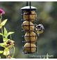 Vogelfutter, Insekten, Meisenknödel-Thumbnail