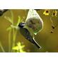Vogelfutter, Meisenknödel-Thumbnail