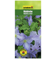 GARTENKRONE Waldrebe, Clematis  »Blekitny Aniol«, Blüten: violett-Thumbnail