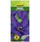GARTENKRONE Waldrebe, Clematis »Mrs. N. Thompson«, Blüten: zweifarbig-Thumbnail