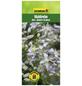 GARTENKRONE Waldrebe, Clematis »Mrs. Robert Brydon«, Blüten: hellblau-Thumbnail