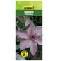 GARTENKRONE Waldrebe, Clematis  »Pink Fantasy«, Blüten: rosa/pink-Thumbnail