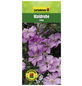 GARTENKRONE Waldrebe, Clematis  »Rosa«, Blüten: rosa/pink-Thumbnail