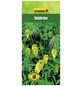 GARTENKRONE Waldrebe, Clematis tangutica, Blüten: gelb-Thumbnail