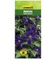 GARTENKRONE Waldrebe, Clematis viticella »Etoile Violette«, Blüten: violett-Thumbnail