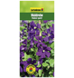 GARTENKRONE Waldrebe, Clematis viticella »Polish Spirit«, Blüten: violett-Thumbnail