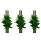 flowerbox Wandbegrünung, BxHxT: 6,5 x 40 x 6,5 cm, braun-Thumbnail