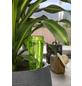 SCHEURICH Wasserspender »COPA«, 0,15 l, grün, Höhe: 18 cm-Thumbnail