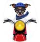 WENKO WC-Sitz »Biker Dog«, Tiere-Thumbnail