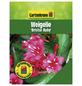 GARTENKRONE Weigelie, Weigela florida »Bristol Ruby«, rot, winterhart-Thumbnail
