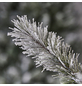 Evergreen Weihnachtsbaum »Cedar Frost«, Höhe: 150 cm, grün/weiß-Thumbnail