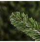Evergreen Weihnachtsbaum »Oxford Kiefer «, Höhe: 180 cm, grün-Thumbnail