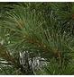CASAYA Weihnachtskranz »Sölden«, Ø 45 cm, grün, Kunststoff, beleuchtet-Thumbnail