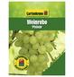 GARTENKRONE Weinrebe, Vitis vinifera »Phoenix« Blüten: creme, Früchte: grün, essbar-Thumbnail