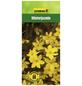 GARTENKRONE Winterjasmin, Jasminum nudiflorum, Blüten: gelb-Thumbnail