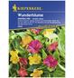 KIEPENKERL Wunderblume, Mirabilis jalapa, Samen, Blüte: mehrfarbig-Thumbnail