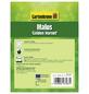 GARTENKRONE Zierapfel, Malus »Golden Hornet«, Blütenfarbe weiß-Thumbnail